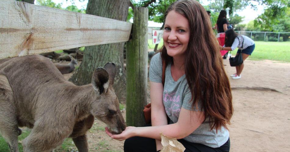 Koala's bezoeken in Australië!